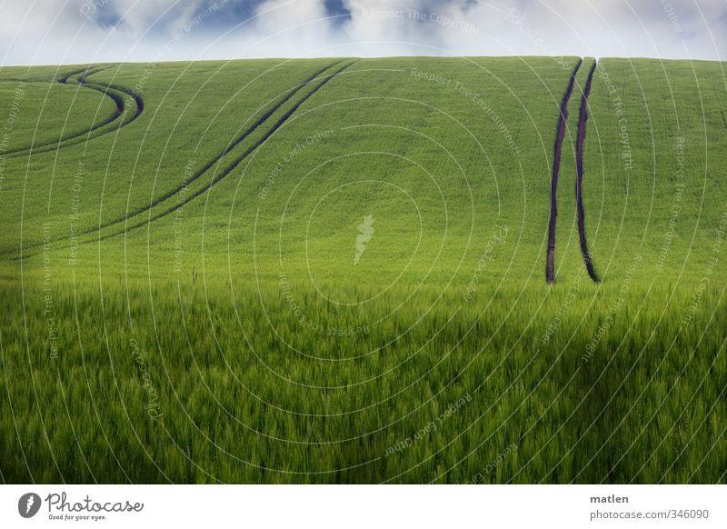 Fahrstil Landschaft Pflanze Himmel Wolken Horizont Frühling Klima Wetter Schönes Wetter Nutzpflanze Feld grün Fahrbahn Getreidefeld Farbfoto Außenaufnahme