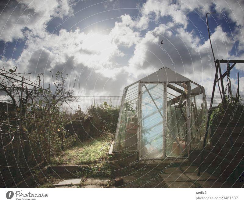 Gewächshausen Garten Schrebergarten gartenkolonie Brombeerhecke alt Glas Tür Gras Himmel Wolken Sonne Sonnenlicht Gegenlicht leuchten strahlen Kontrast