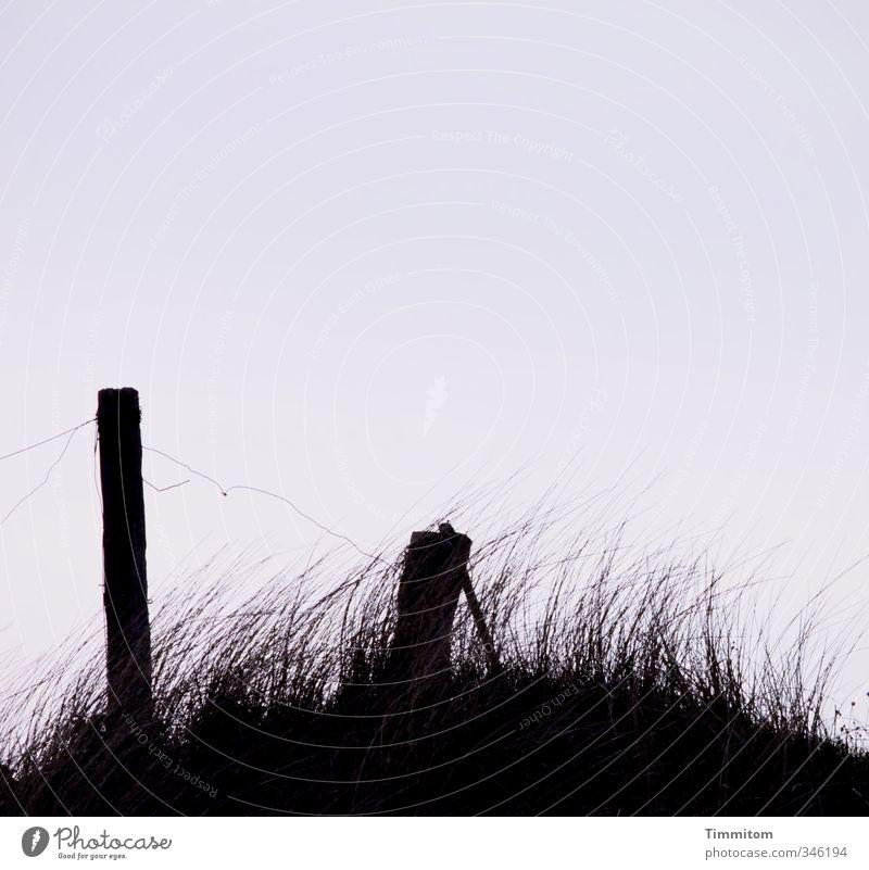 Gedanken. Umwelt Natur Himmel Pflanze Dünengras Hügel Nordsee Dänemark Pfosten Draht Holz Zeichen ästhetisch dunkel einfach natürlich schwarz Gefühle Ferne