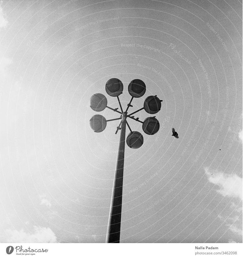 Abtrünnigkeit oder Wie ein Bild aussieht, wenn einer großen Straßenlaterne ein Element fehlt und sich eine Taube aus dem Kreis ihresgleichen von diesem und eben erwähnter Laterne durch die Luft entfernt