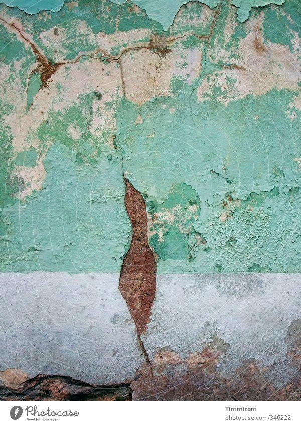 Ein Märchen. Heidelberg Haus Mauer Wand Blick ästhetisch violett weiß Gefühle Putz Figur Riss verfallen Silhouette Verbindung Kolibris Farbfoto Außenaufnahme