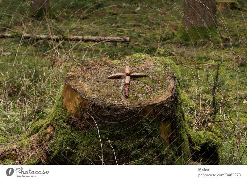 Das Kreuz ist auf einem Tannenzapfenstumpf ausgelegt Hintergrund Muster Holz braun Natur texturiert abstrakt gelb durchkreuzen geschnitten Wald Leben natürlich