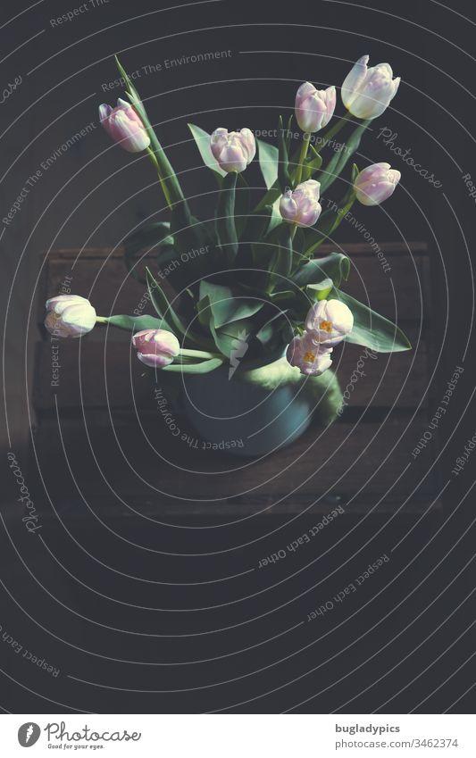 Rosa Tulpen in einer weißen Emaille-Vase auf einer alten Obstkiste von oben im Stile eines Stilllebens tulpenstrauß Blumenstrauß Frühling schön Innenaufnahme