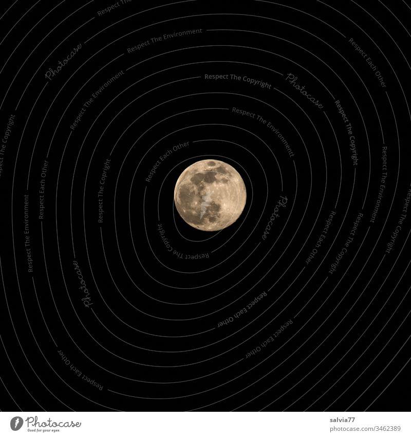 Vollmond bei Nacht Natur Umwelt Mond Mittelpunkt Außenaufnahme Hintergrund neutral Freisteller Astronomie Planet trabant 600 leuchten Menschenleer Farbfoto
