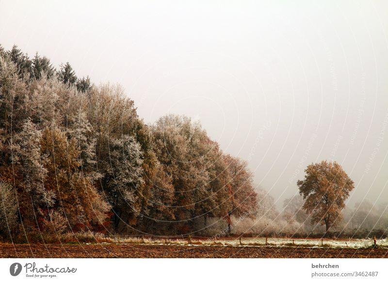winterspaziergang Winter Wald Schnee Bäume Frost Landschaft Natur Umwelt Wiese Feld Herbst laub Herbstlaub Herbstlandschaft Winterlandschaft kalt Kälte frieren