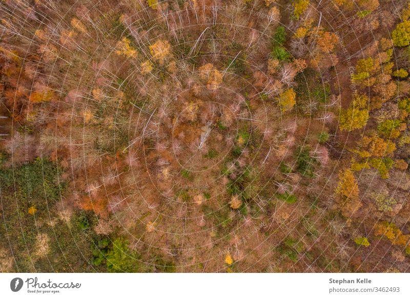 Wald im Spätherbst von oben per Drohne aufgenommen wald bäume drohne geäst spätherbst blätter kahl bunt tag copter draufsicht vogelperspektive grün orange holz