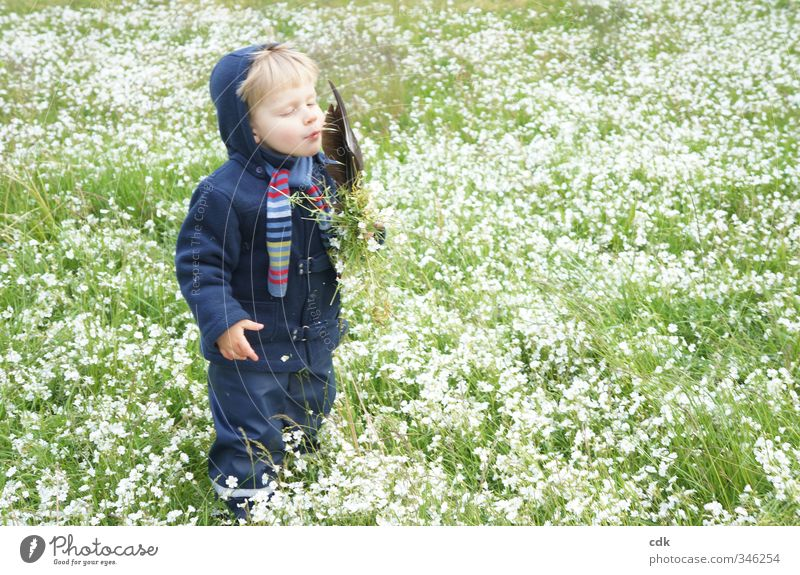 Abschied vom Sommer Mensch Kind Kleinkind Junge Kindheit 1 3-8 Jahre Umwelt Natur Landschaft Frühling Herbst Garten Park Wiese Jacke Schal Kapuze blond
