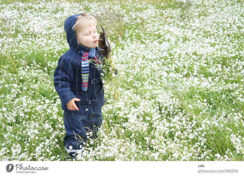 Abschied vom Sommer Mensch Kind Natur blau grün weiß Erholung Landschaft Umwelt Herbst Wiese Junge Frühling Garten träumen Park