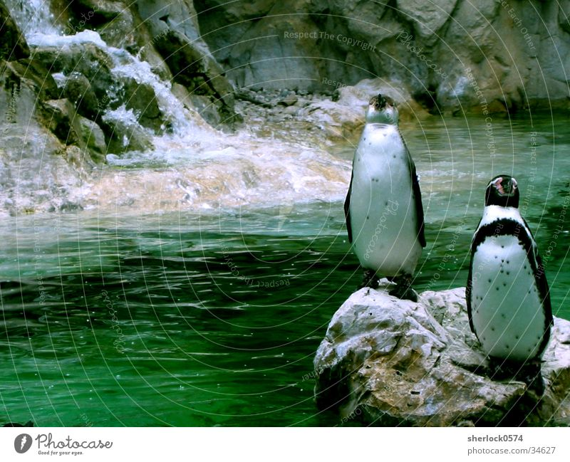 pinguin/3 Wasser grün kalt Eis Zoo Pinguin Wien Schloss Schönbrunn