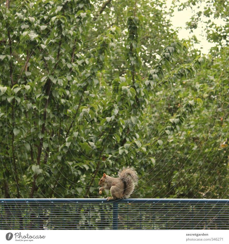 vorräte hamstern. Natur grün Pflanze Sommer Baum Einsamkeit Tier Umwelt Tierjunges klein oben Essen Garten Park Zufriedenheit sitzen