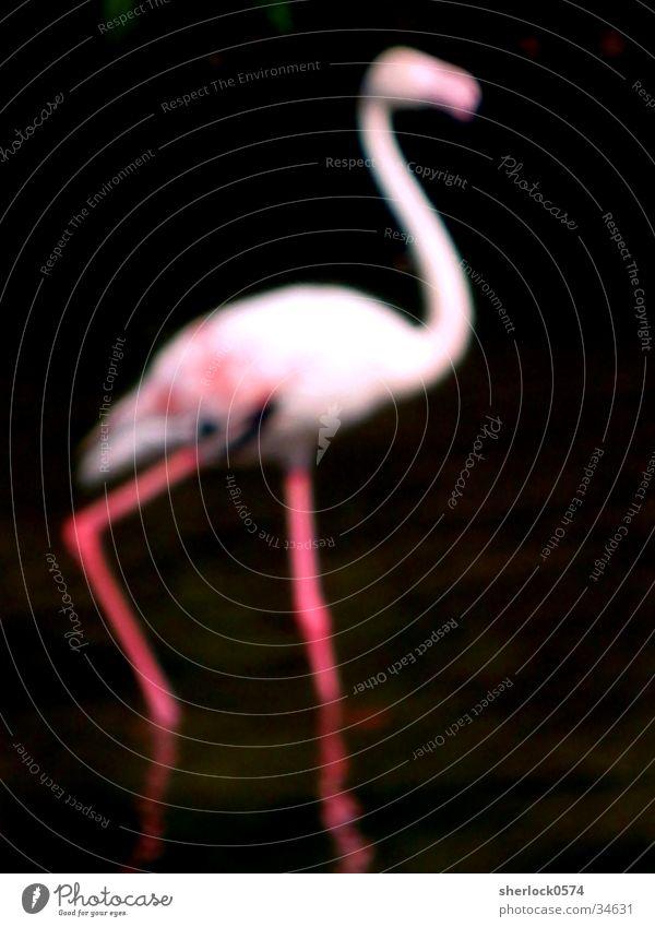 """Flamingo """"unscharf"""" Wasser schwarz Tier Vogel rosa Zoo Pfosten"""