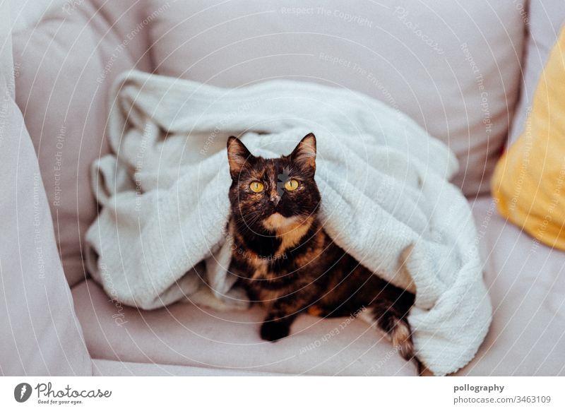Katze sitzt unter einer Decke Buchcover Motiv cateye Katzenkopf Tier Haustier Fell Tierporträt Hauskatze Farbfoto beobachten Tiergesicht pink rosa Tüll Tüllrock
