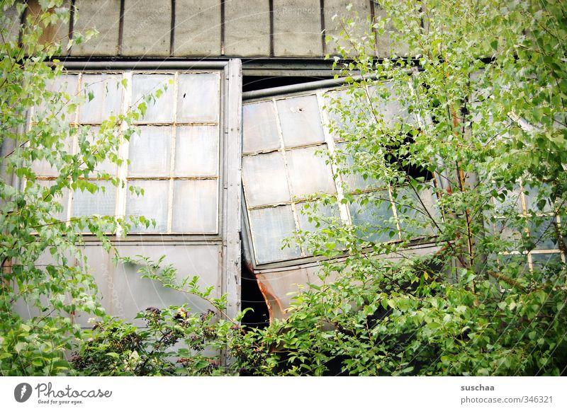 tor kaputt Natur Pflanze Baum Sträucher Blatt Grünpflanze Garten Fabrik Tor Bauwerk Gebäude Architektur Tür Glas alt Verfall verwuchert Fenster Fensterscheibe