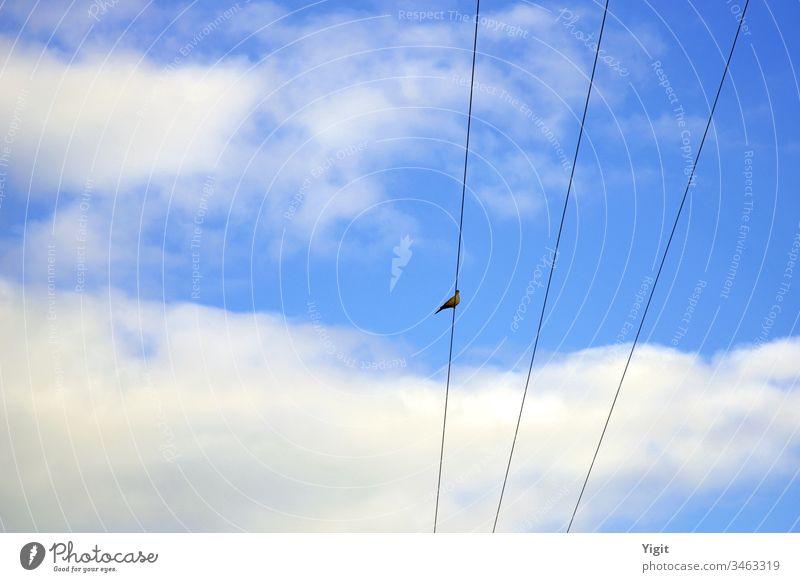 Auf dem Stromkabel ruhende Hohltaube (Streptopelia decaocto ) Vogel Kabel Himmel blau Wolken Tag Kragentaube Textfreiraum links Textfreiraum oben Tier wild
