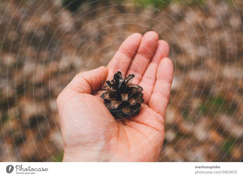 Kiefern Zapfen in der Hand grün Grünpflanze Natur Outdoor Bokeh Umriss Silhouette Blätter haltend Boden Nadelbaum Nadelwald Kiefernzapfen Kiefernwald