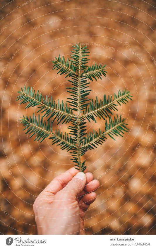 Tannezweig in der Hand grün Grünpflanze Natur Outdoor Bokeh Umriss Silhouette Blätter Tannenzweig Tannennadel haltend Boden