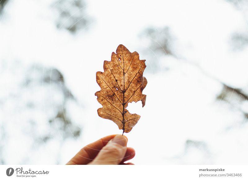 Eiche Blatt im Gegenlicht grün Grünpflanze Natur Outdoor Bokeh Schatten Umriss Silhouette Eichenblatt Eichenwald