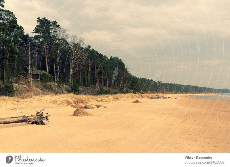 Sandige Ostseeküste mit Kieferndünen Hintergrund Strand Baum Hund Wasser Muster Sport Sommer Textur Natur Winter Technik & Technologie Konstruktion Sonne