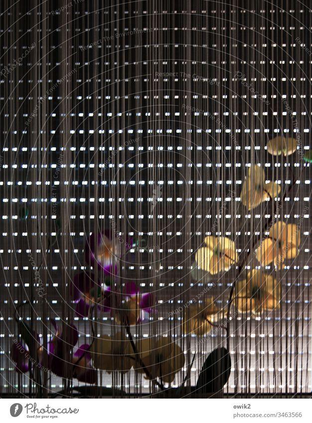 Textur Fenster Jalousie Rollo Vorhang geschlossen Schatten Menschenleer Häusliches Leben Rollladen Fassade Detailaufnahme Licht Strukturen & Formen Kontrast