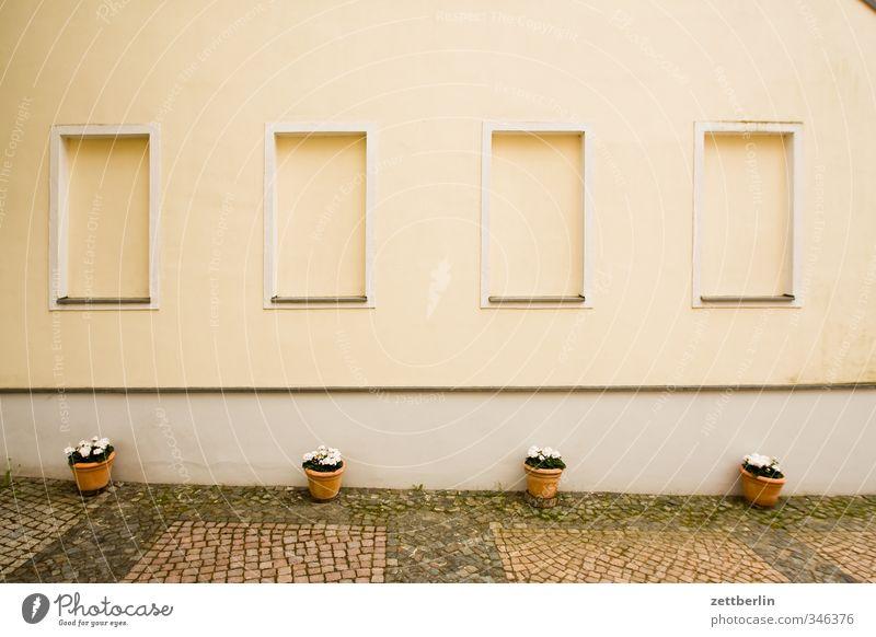 Fantastic Four Lifestyle ruhig Häusliches Leben Wohnung Haus Traumhaus Natur Blume Topfpflanze Garten Park Dorf Kleinstadt Stadt Altstadt Architektur Mauer Wand
