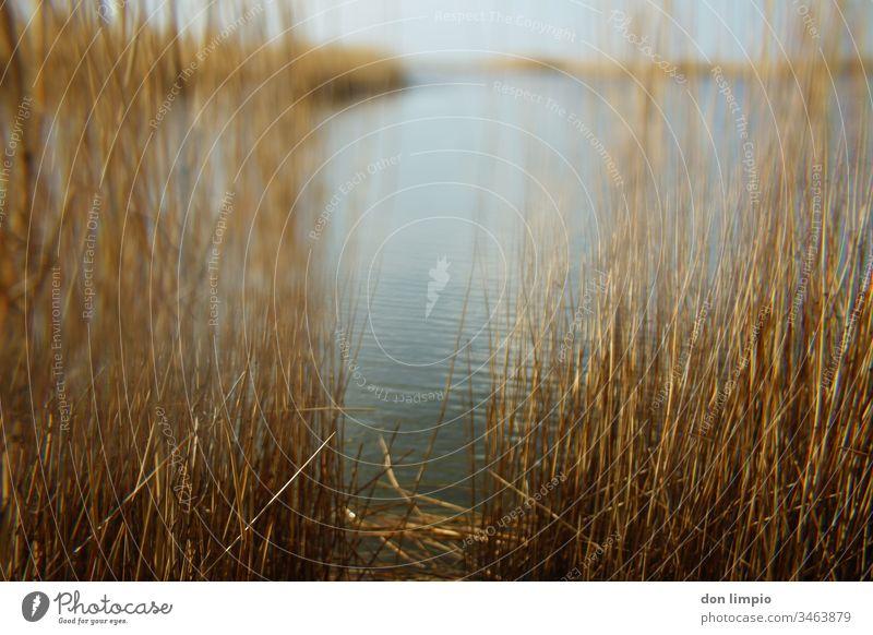 Strandseelandschaft im selektiven Fokus Teichufer Schilf Natur Außenaufnahme Landschaft Wasser Prisma Pflanze Farbfoto Schwache Tiefenschärfe Menschenleer