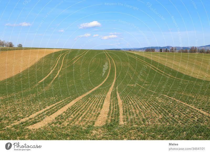 Frühlingslandschaft mit Feldern mit grünen Pflanzensprossen Ackerbau Land Landschaft ländlich Ackerland Natur Umwelt Sommer Gras Wiese Ernte Bauernhof Himmel