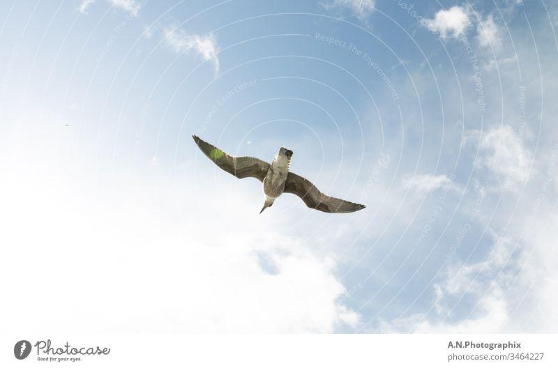 Vogel beim fliegen von unten Fotografiert bei strahlenden Sonnenschein Vogelperspektive Vogelbeobachtung Möve Möven Mövenpick Tiere in der Wildnis Tierliebe