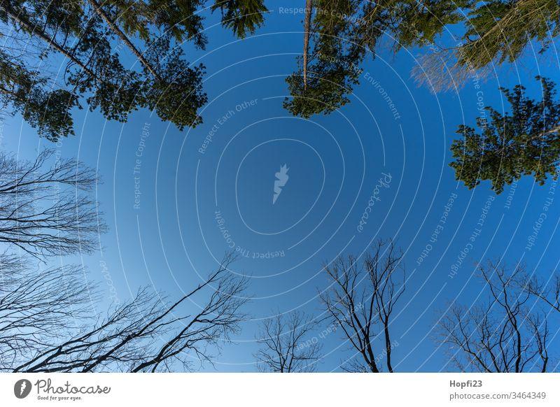 Blick in den Himmel blau Wald Mischwald Nadelbaum Laubbaum Kiefer Kiefern Buche Buchen klar hoch sehen Landschaft Natur draußen Spaziergang wandern Erholung