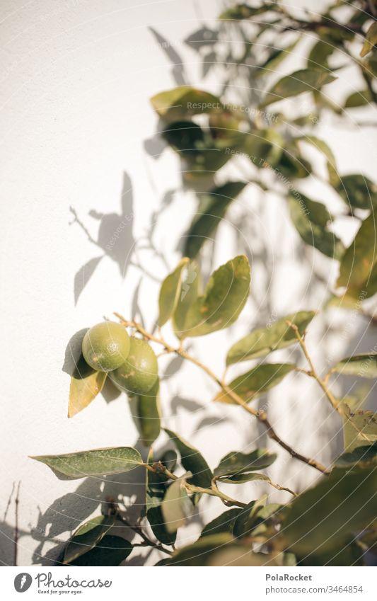 #AS# Schattenspiel Limettenbaum limette Lebensmittel Nahaufnahme Zitrusfrüchte natürlich grün Frucht Ernährung Diät frisch Farbfoto Gesundheit