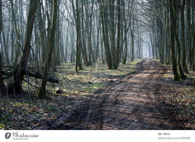 die richtung stimmt Umwelt Natur Landschaft Herbst Winter Pflanze Baum Wald wandern Fußweg Nebel Forstwirtschaft Forstweg Moos natürlich Erholung ruhig Schneise
