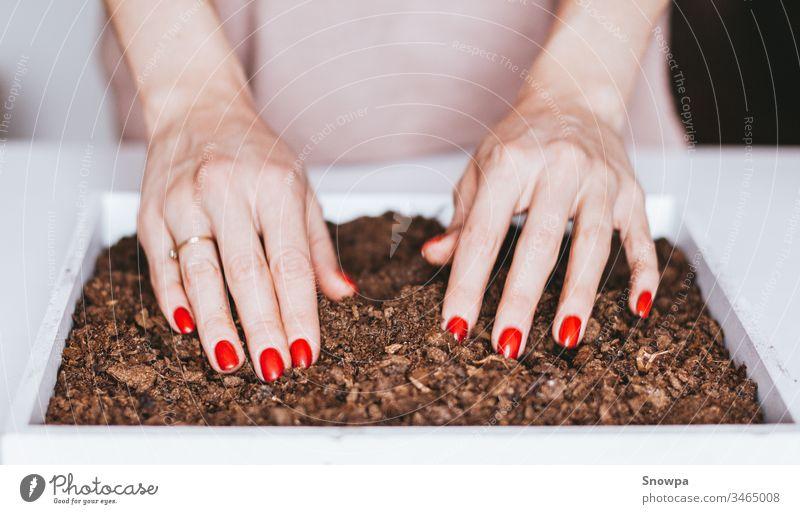 Nahaufnahme der Hände einer jungen Frau, die Samen in den Boden pflanzt. Ökologisches Leben. Pflanze Topf Gartenarbeit heimwärts Natur grün Frühling Gärtner