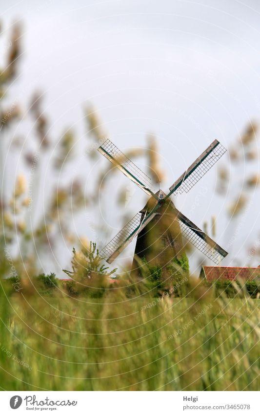 historische Windmühle   hinter unscharfen Gräsern vor blaugrauen Himmel Mühle alt Wallholländer Feld Kornfeld Gras Farbfoto Architektur Tradition Gebäude