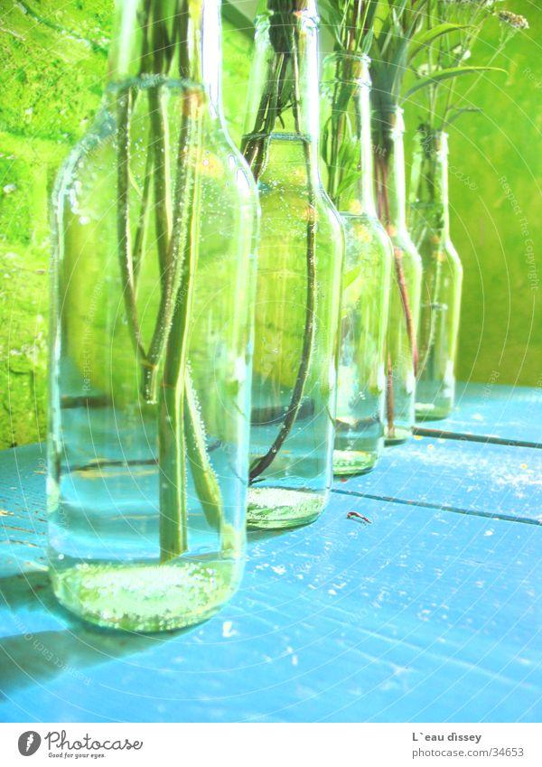 summerbreeze Vase Blume Dekoration & Verzierung frisch Wiesenblume Wassertropfen Fototechnik Flasche Blumen-Solo