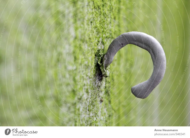 Abgehakt Moos Haus Bauwerk Mauer Wand Fassade Haken Stein Beton Metall festhalten hängen tragen einfach stark grau grün Ordnungsliebe Stress aufhängen