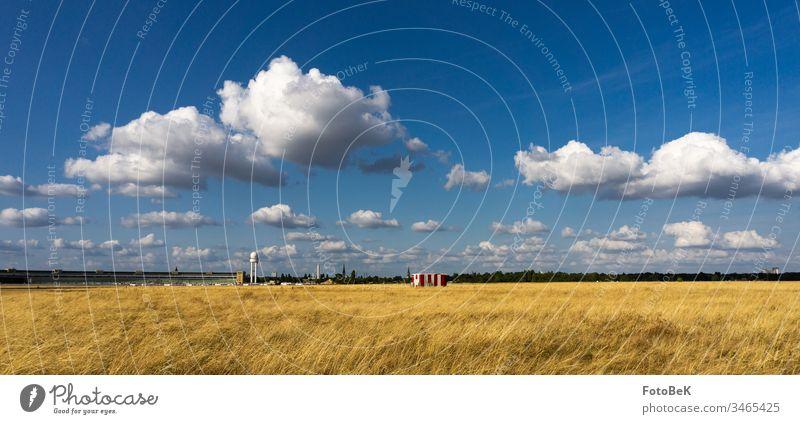 Tempelhofer Feld an einem sonnigen Augusttag Wiese Wolken Wolkenhimmel Wolkenformation weite Sicht Blauer Himmel Horizont Flughafen Tempelhof Berlin