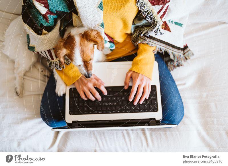 junge Frau, die mit Laptop und Mobiltelefon arbeitet, daneben süßer kleiner Hund. Auf der Couch sitzend, Schutzmaske tragend. Bleiben Sie zu Hause Konzept während Coronavirus covid-2019