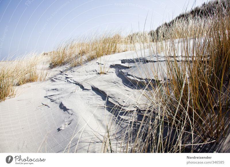 Wenn der (Strand) hafer sticht..... Sommer Sommerurlaub Sonne Meer Natur Landschaft Pflanze Wolkenloser Himmel Schönes Wetter Küste Nordsee Sand trocken Wärme