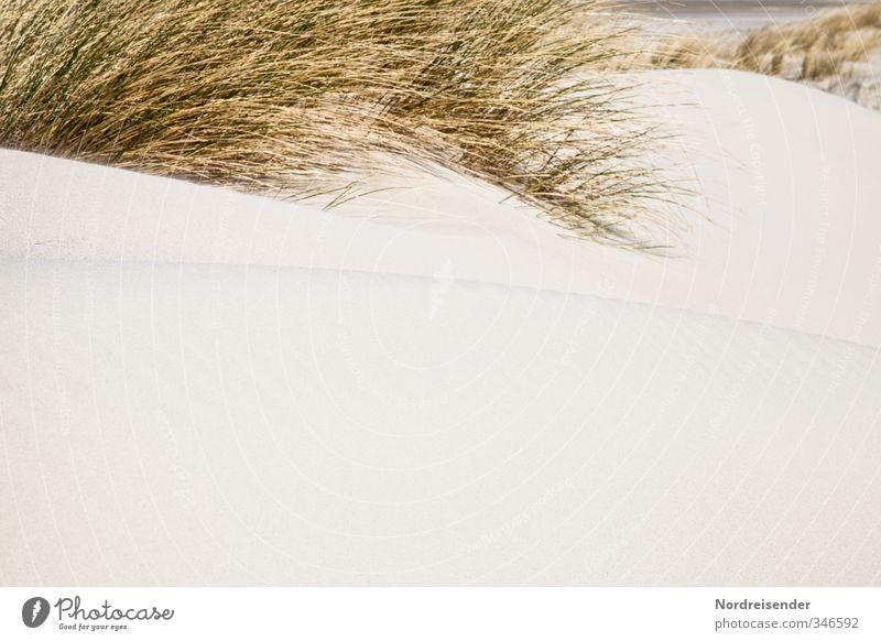 Dünen Natur Ferien & Urlaub & Reisen Sommer Pflanze Meer Erholung Strand gelb Gras Küste Sand retro trocken Sommerurlaub Nordsee