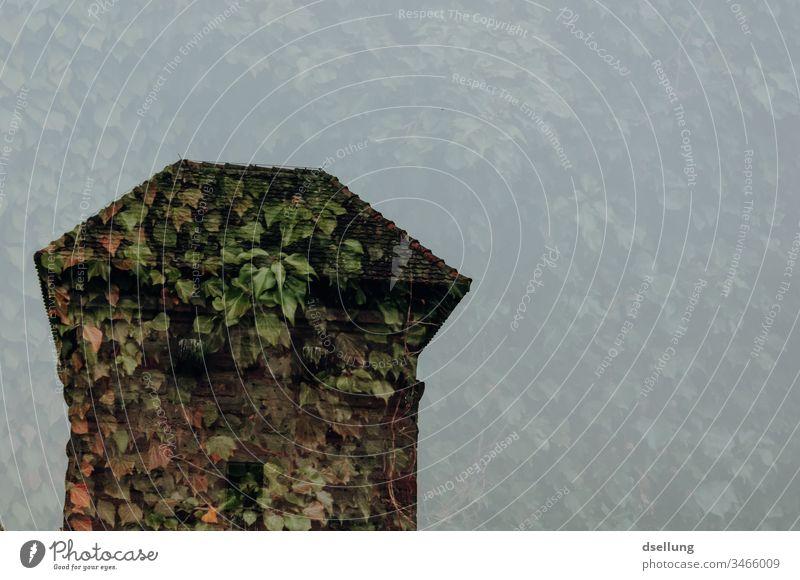 Doppelbelichtung eines Turms aus Blättern Wachturm Hecke Strauch Busch Blattwerk grün Denkmal Natur historisch Bauwerk Bewuchs erobert verlassen Blätterdach