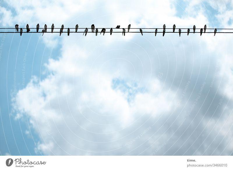 Sicherheitsabstand Tiere Leben Himmel Vogel sitzen Leitung Schwalben Außenaufnahme Umwelt Menschenleer Wildtier Natur Gedeckte Farben wolken überlandleitung