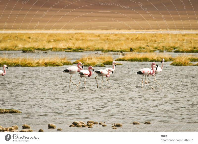 Flamingoes Natur Sommer Landschaft Tier Umwelt klein See Vogel rosa Erde Wildtier Klima Schönes Wetter Urelemente Tiergruppe Seeufer
