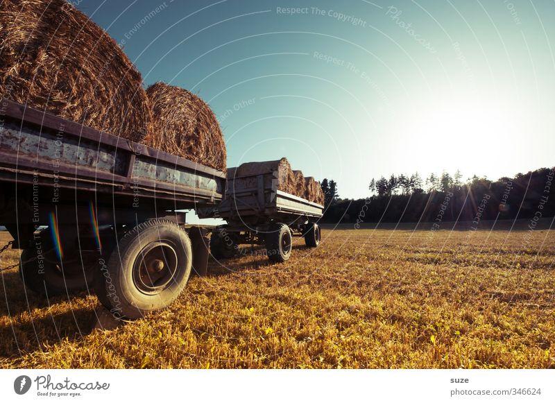 Feldwagen Getreide Sommer Landwirtschaft Forstwirtschaft Umwelt Natur Landschaft Himmel Horizont Schönes Wetter Wärme Nutzpflanze Fahrzeug Lastwagen Anhänger