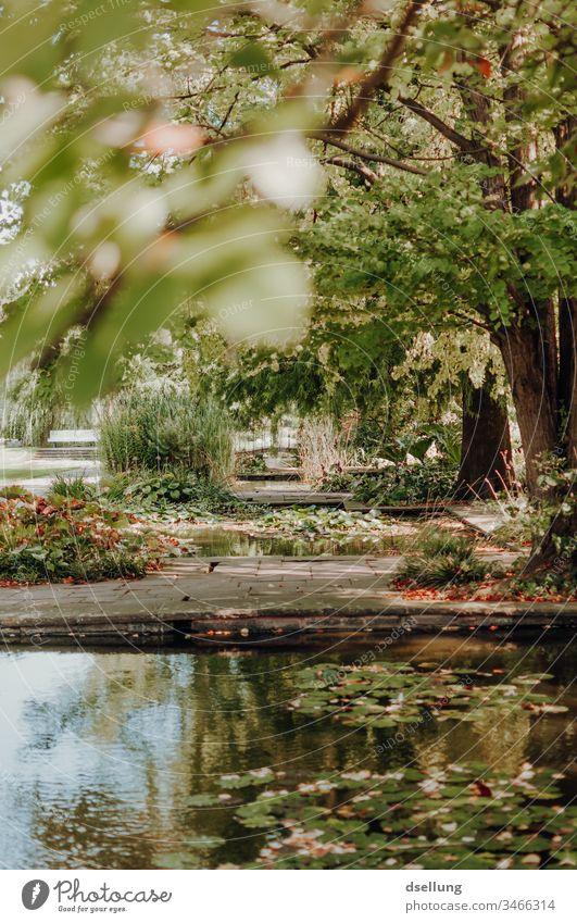 Blick in einen grünen Park unter einem Baum hindurch Wellness Tag harmonisch gehen Schatten allein Wohlgefühl Erholungsgebiet Zufriedenheit Pfad Ziel