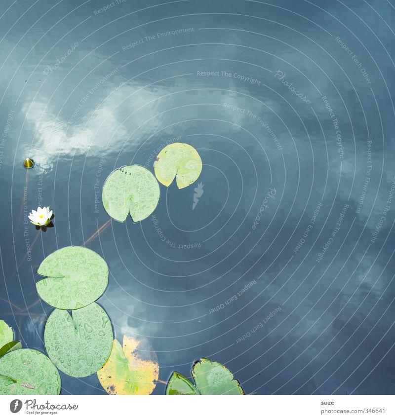 Teichbewohner Himmel Natur blau grün schön Wasser Pflanze Erholung Blatt Umwelt kalt Blüte See Stil Zufriedenheit Wachstum