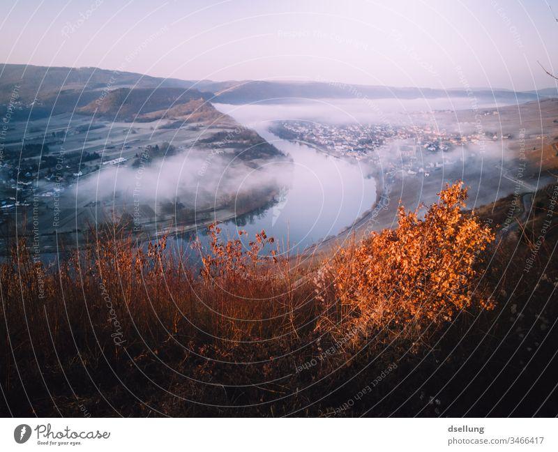 Mosel von oben, im leichten Nebel mit Herbstfarben herbstlich Herbstfärbung Mosel (Weinbaugebiet) moseltal Farbfoto Fluss Tourismus Landschaft Tag Weinberg