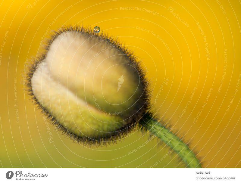 Zwischenstopp Himmel Natur Pflanze Sommer schön grün Blume Landschaft Tier Umwelt gelb Blüte Frühling Wiese außergewöhnlich Garten