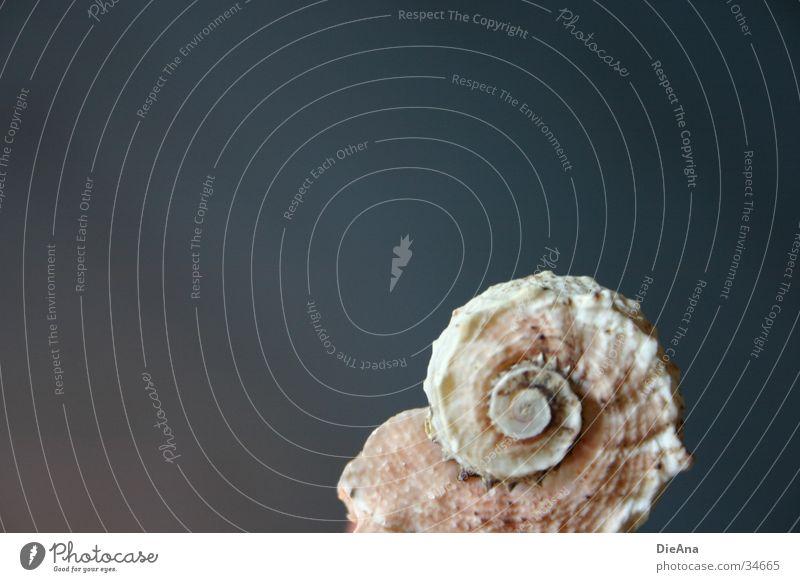 unbewohnt weiß blau Meer Stil grau Sand Hintergrundbild Ecke Dekoration & Verzierung Dinge Muschel Oberfläche beige Spirale rau
