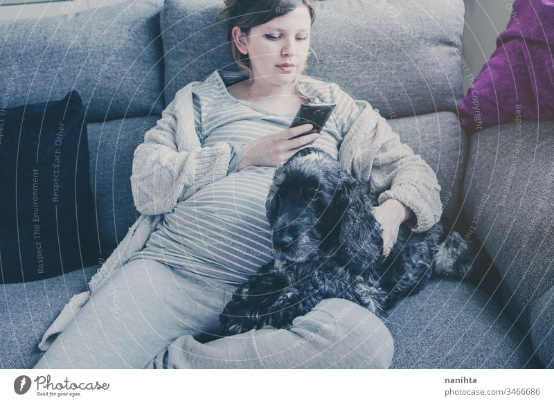 Junge schwangere Frau mit ihrem Hund heimwärts Quarantäne Mama Familie Sofa Freundschaft heimisch Haustier Cocker Spaniel Leben Lifestyle Single allein