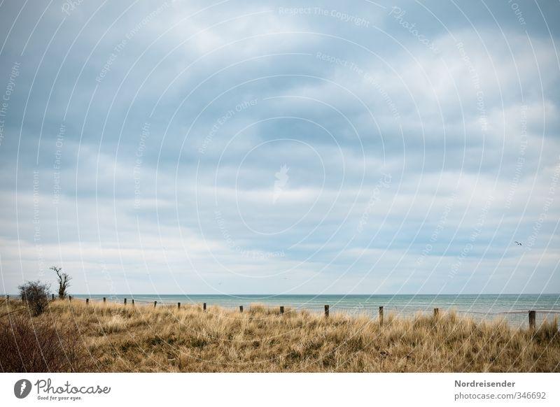 Ostsee Himmel blau Pflanze Baum Meer Landschaft ruhig Wolken Strand Ferne Herbst Gras Küste Horizont braun Wind