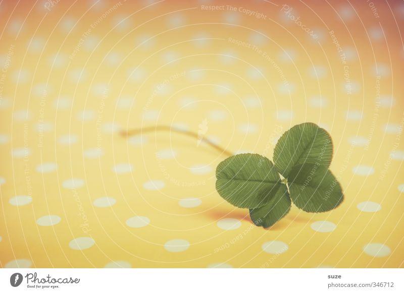 Kleines Glück grün Pflanze Blatt gelb Glück klein Erfolg Lifestyle Fröhlichkeit niedlich Zeichen Wunsch Vorfreude gepunktet Kleeblatt Glücksbringer